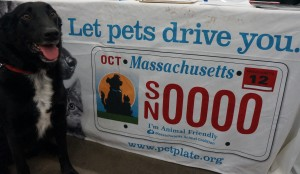 Buddy for MA I'm Animal Friendly License Plates