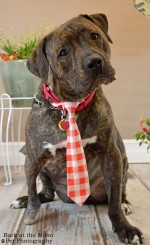 Orville 6 months later - photo courtesy Bark at the Moon Photography