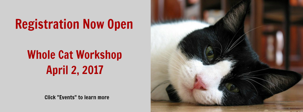 Whole Cat Workshop